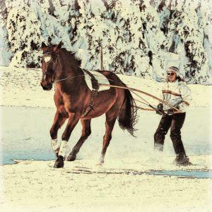 ski-joëring-cheval (2)